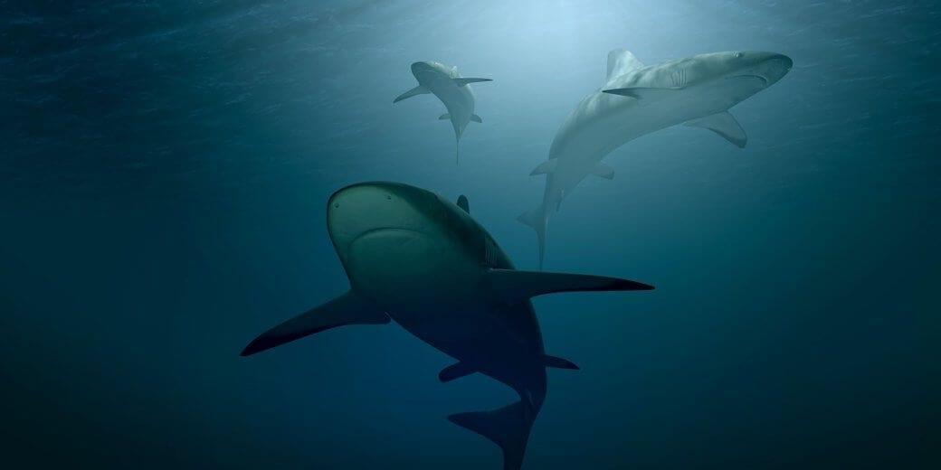 data-analysis-of-sharks