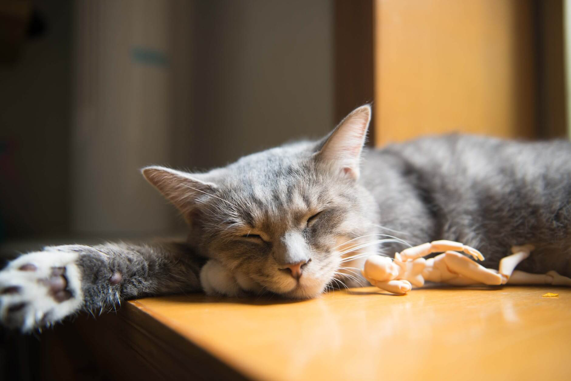 study tip - getting proper sleep really helps with learning